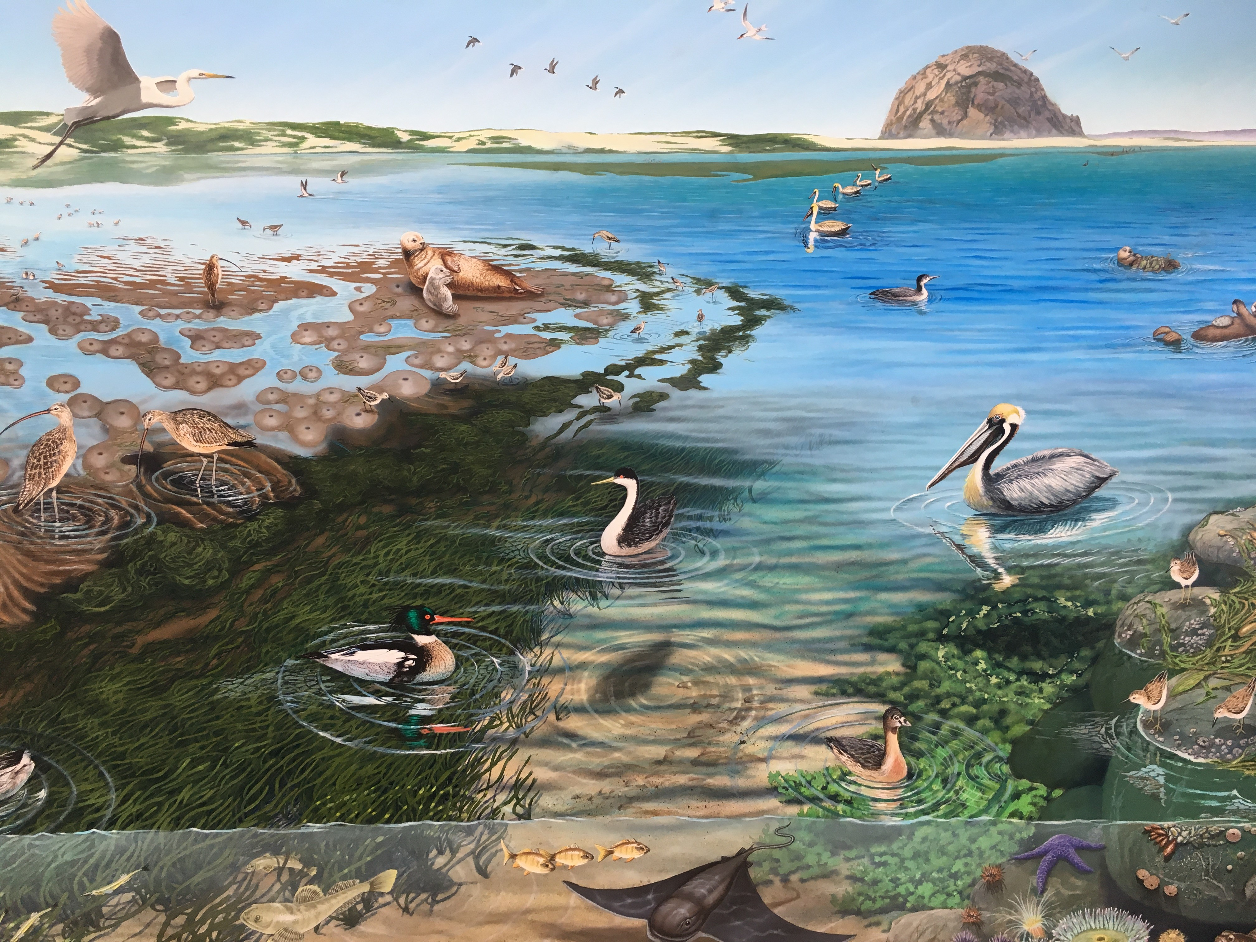 Morro Bay National Estuary Program